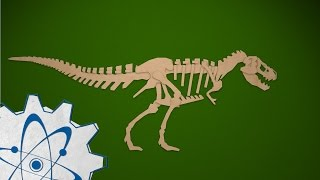 Adaptations and Fossils: MEA 4th Grade Series