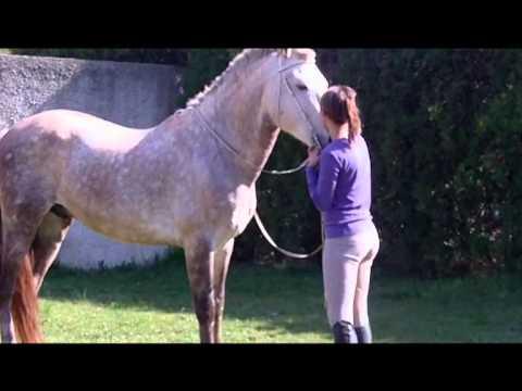 Julie plas video cheval au galop dressage et libert youtube - Comment dessiner un cheval au galop ...