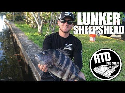 Lunker Sheepshead - Mike O