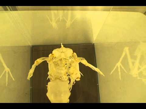 The Bird Skeleton