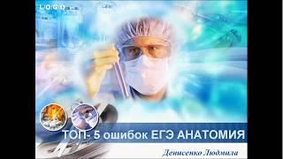 Топ-5 ошибок по анатомии в ЕГЭ по биологии