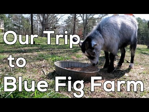 Visit Blue Fig Farm