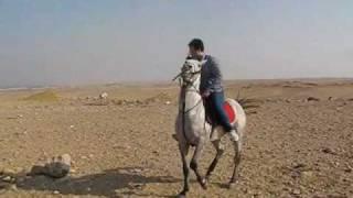 Ziad Torkey Making the new horse dance [HQ]