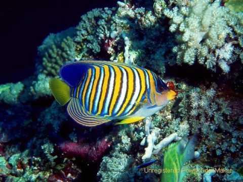 pesci e coralli youtube