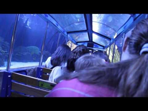 Shark Adventure train ride at Houston Downtown Aquarium
