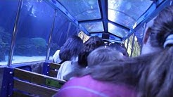 Shark Adventure train ride at Houston Downtown Aquarium