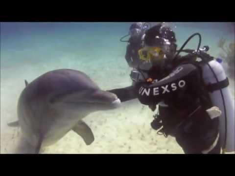 Dolphin Scuba Dive
