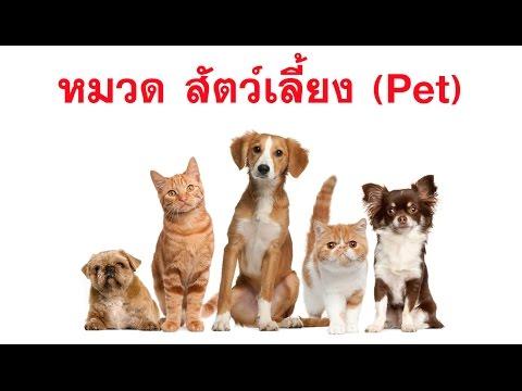 สอนออกเสียงคำศัพท์ภาษาอังกฤษ ชุด2 หมวด สัตว์เลี้ยง (Pet)