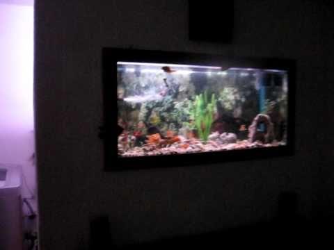 Mi acuario incrustado en pared youtube - Pecera de pared ...