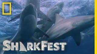 North Carolina Shark Frenzy | SharkFest