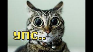 Кот храпит и пукает :)