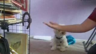 Fun Dog Tricks with Pheobie thumbnail