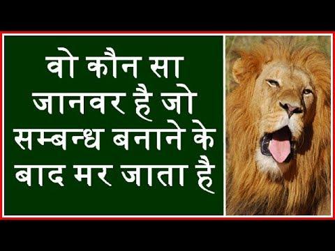 वो कौन सा जानवर है जो सम्बन्ध बनाने  के बाद मर जाता है ? gk in hindi.