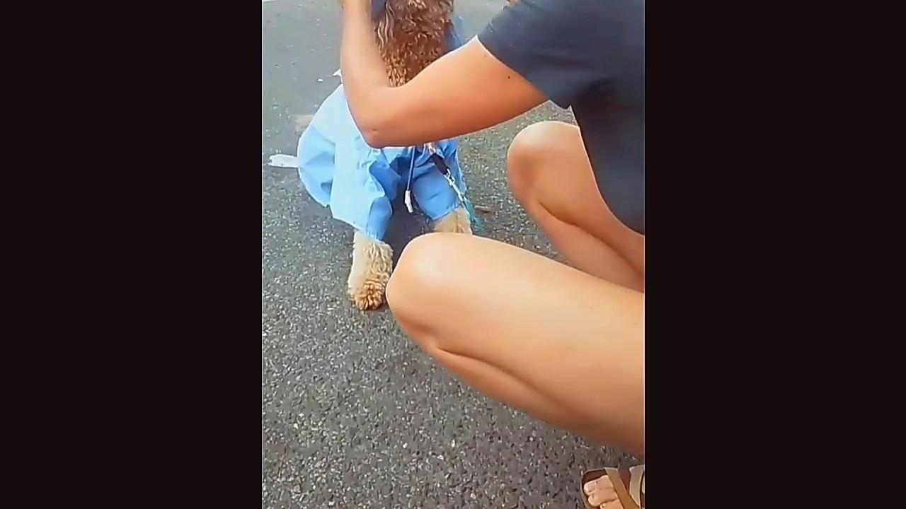 DOGGY FASHION SHOW