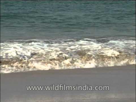 Sea waves hitting the shores
