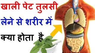 जानें सुबह खाली पेट तुलसी के पत्ते खाने से शरीर में क्या होता है Tulsi Basil Amazing Health Benefits