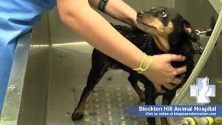 Furminator-three Steps To Help You Pet Shed Less