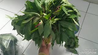 Cara membuat tempe daun Singkong