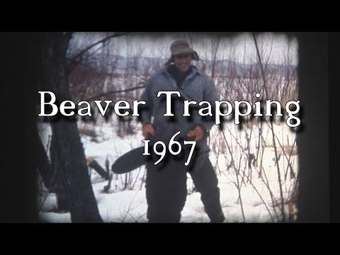 Life of a Beaver Trapper 1967