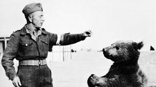 حيوانات استخدمت كأسلحة خطيرة بالحروب