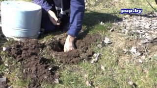 Как избавиться от кротов в саду на огороде  How To Get Rid Of Moles In The Garden And The Garden