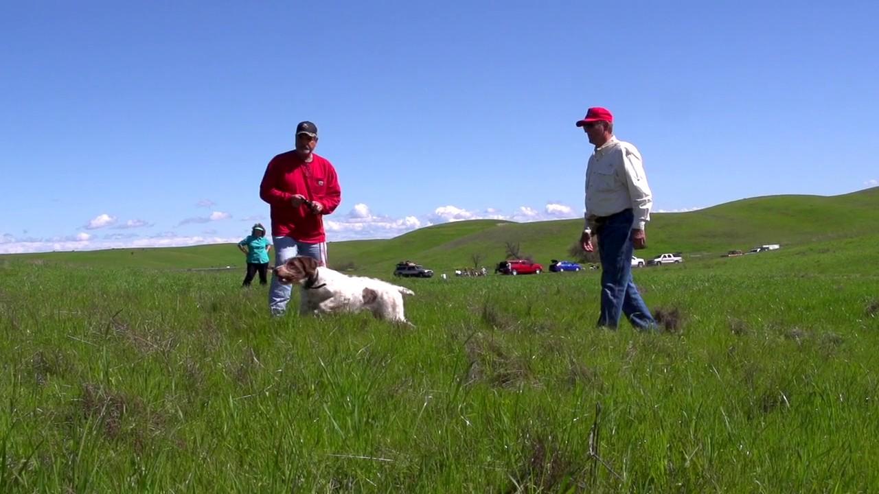 Rick Smith Hunting Dog Training