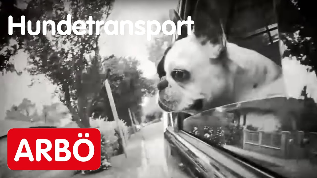 hunde im auto richtig transportieren so geht 39 s youtube. Black Bedroom Furniture Sets. Home Design Ideas