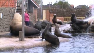 Steller Sea Lion Show | Dolfinarium Harderwijk