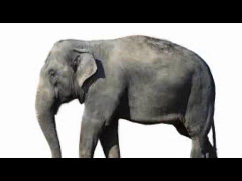 anekdoty Продажа слона