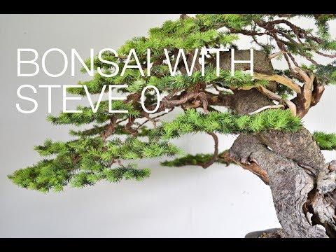 Bonsai with STEVE O!