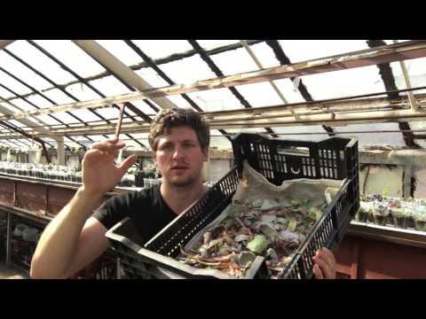 Георгий Аристов - почему я не продаю листики суккулентов