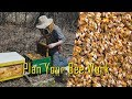 Beekeeping With A Plan