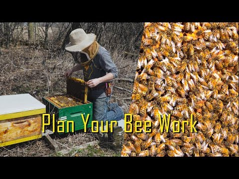 Beekeeping With A Plan Mp3