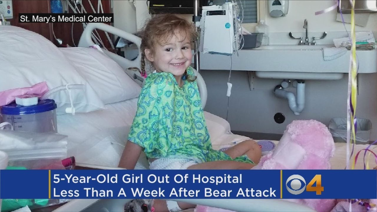 5-Year-Old Released From Hospital After Bear Attack