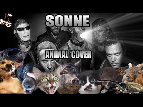 Rammstein - Sonne (Animal Cover)