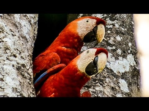 """Costa Rica""  Documentary Film (English)"