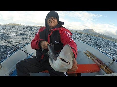 Рыбалка в норвегии , Ловим Акул на живца !!!