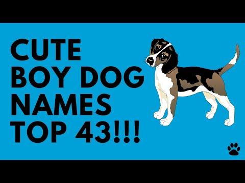 Cute Boy Dog Names - 43 BRILLIANT Ideas!!! | Names