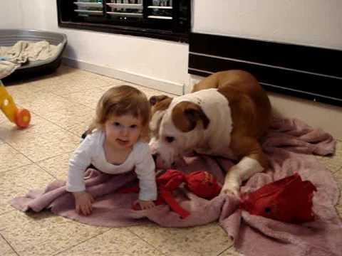 American Bulldog And Baby Playing Youtube