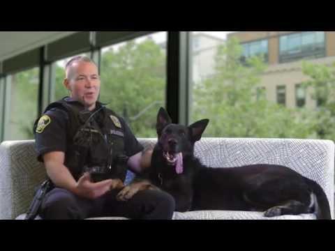 Lynnwood's K-9 Heroes: Police Dog Zando