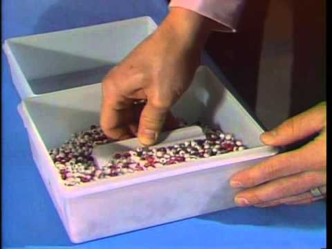 Red Bead Experiment with Dr. W. Edwards Deming