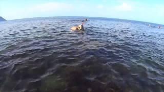 Анапа, пляж Высокий берег.(Это видео о пляже на Высоком берегу в Анапе, на ул. 40 лет Победы. Анапа, галечный пляж., 2015-06-18T19:24:16.000Z)