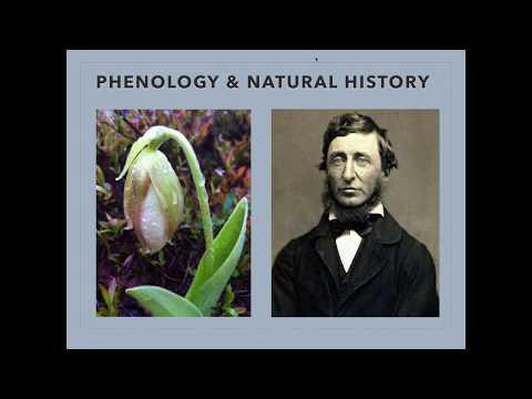 Uncovering the Past Through Maine's Historic Phenology Data