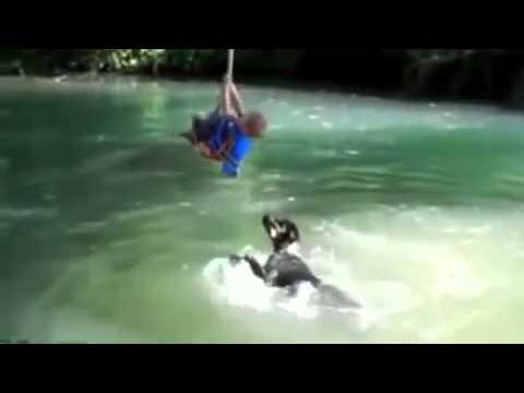 Videos de risa nuevos 2013 Los mejores videos de risa 2013 caidas y golpes