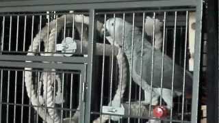 папугай жако Гоша 10месяцев