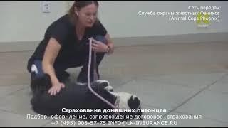 ЛКС - Любовь к животным (служба охраны животных Феникса)