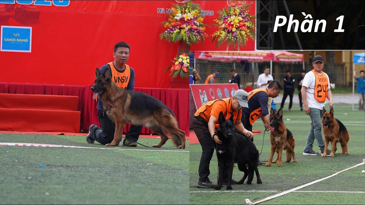Chó Becgie đẹp VSM 2020-Tập 8 P1: Chó đực open trên 24 tháng| Vietnam German shepherd dog show