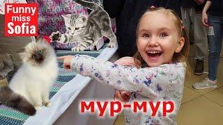 Международная выставка кошек в Одессе. Невская маскарадная, бенгальский кот и многие другие