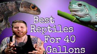 Top 5 Reptil…