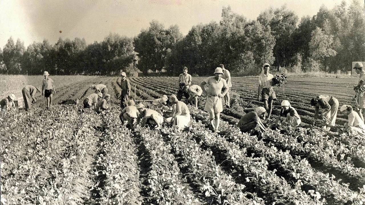 Image result for history of agriculture